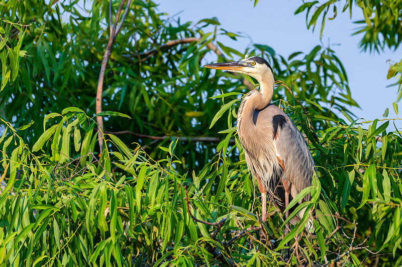 Vertebrate Plant Animal Themes One Animal Animals In The Wild Bird Animal Animal Wildlife Green Color Growth Heron Nature Perching No People Tree Water Bird Gray Heron Beauty In Nature Grass Day
