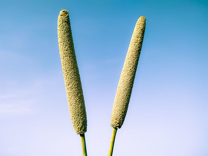 Close-up of plant against blue sky