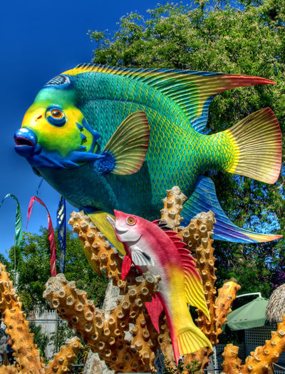 Just a giant fish statue in the Florida Keys... Animal Themes Animals In The Wild Beauty In Nature Blue Close-up Colorful Fish Green Green Color Majestic Multi Colored Nature No People Statue Vibrant Color Wildlife Zoology