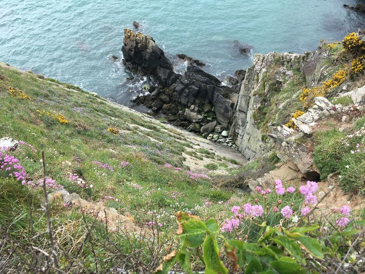 Coastline Coastline Landscape Gorse Bush Ocean View Oceanside Pembroke Welsh Corgi South Wales Wales Wales UK Beauty In Nature Coast Coast Life Coastal Flower Collection Flowers Gorse Flowers Heather & Gorse Nature Nature_collection Ocean Pembrokeshire Pembrokeshire Coast Sea Sea And Sky Seascape