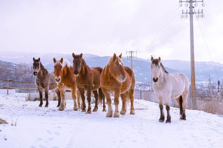 Herd of amazing