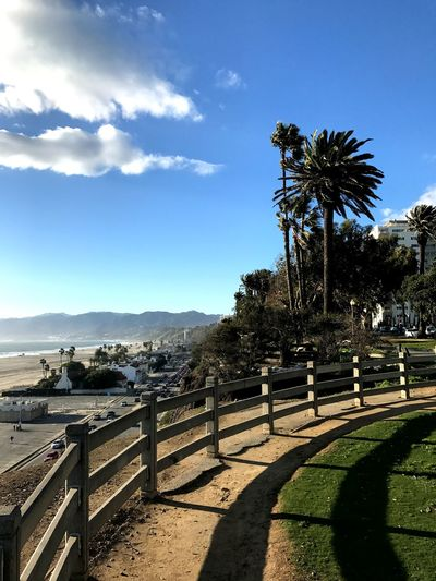 Palisade Park, Santa Monica, California West Coast View Mountains Beach California Santa Monica Paradise Sun Vacations Stroll Walk Palisades Interstate Park Palisades State Park Coastline Pacific Ocean Palm Tree Shadow Sunlight Sky Day Tree Nature Outdoors