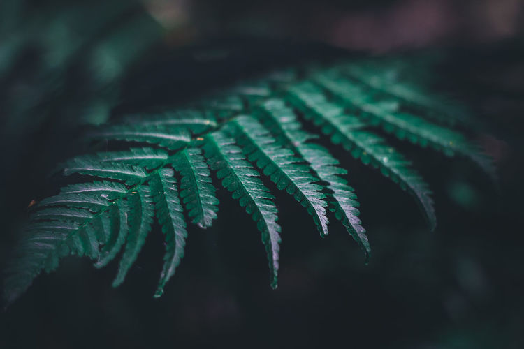 Travel Traveling Bali Bali, Indonesia Thailand Summer Nature Outdoors Leaf Growth Plant Part Close-up Green Color Plant Selective Focus Beauty In Nature No People Day Focus On Foreground Fern Tree Freshness Vulnerability  Fragility Tranquility Natural Pattern Coniferous Tree Pine Tree Leaves My Best Photo