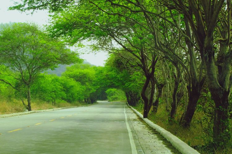 Starting A Trip Taking Photos Check This Out On The Road Roadtrip Learn & Shoot: Leading Lines Vegetation Camino All You Need Is Ecuador Carretera