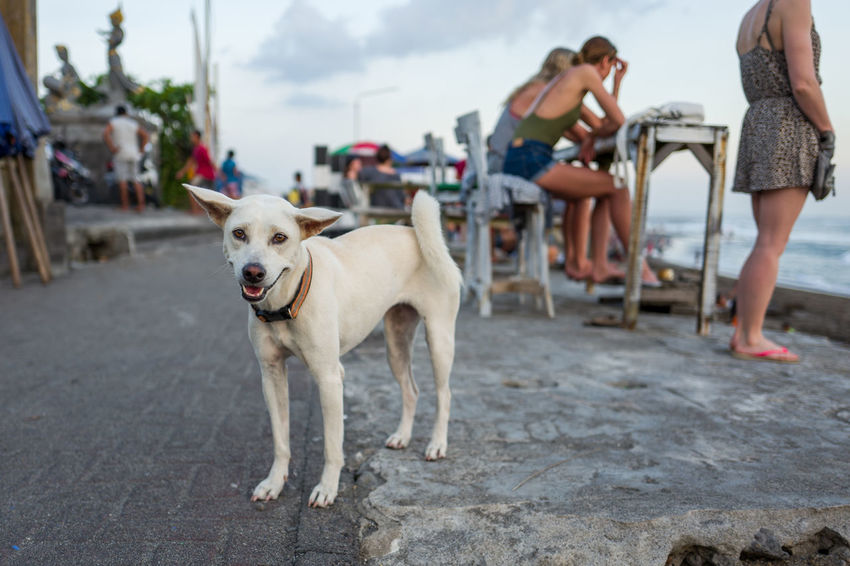 Dog in Canggu Canine City Day Dog Domestic Domestic Animals Focus On Foreground Group Of People Incidental People Leisure Activity Lifestyles Mammal One Animal Outdoors People Pet Owner Pets Real People Street Teenager Vertebrate