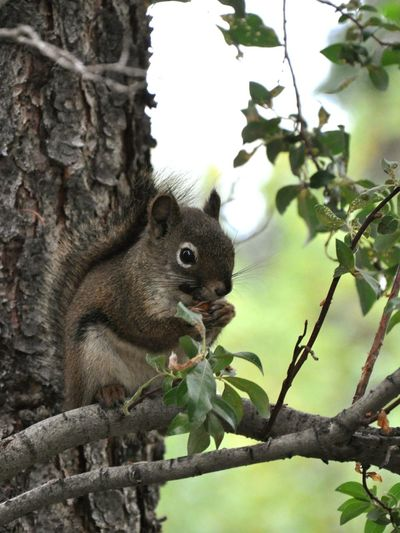 Squirrel Alaska