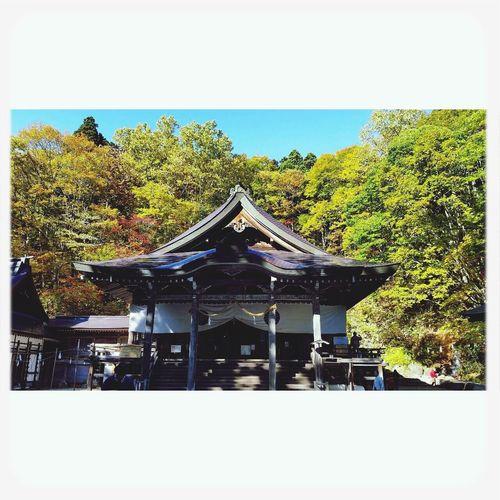戸隠 Togakushi Shrine Nature Autumn