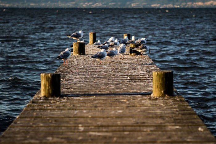 Bird Photography Pier Seagulls Bird Poop Close-up Day Guano Jetty Nature No People Outdoors Pier Sea Seagulls And Sea Seagulls At The Lake Sky Water Wood - Material Wooden Post