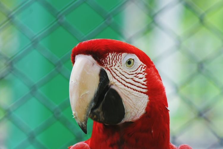 Close-Up Of Green-Winged Macaw At Emperor Valley Zoo