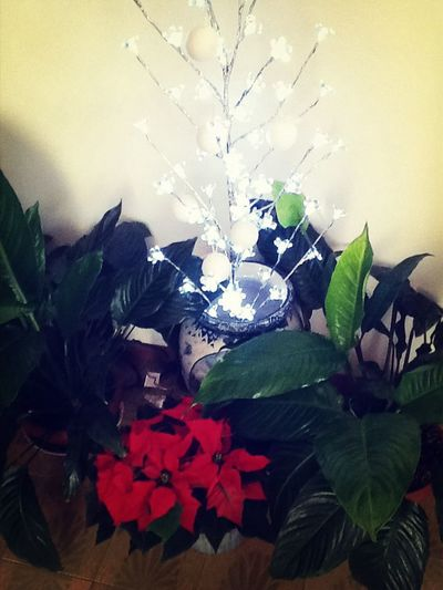 The essence of Christmas :)