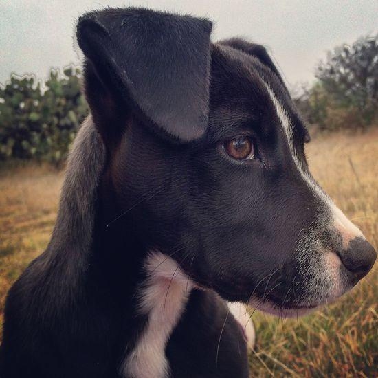 Pet Portraits Oliver Dog