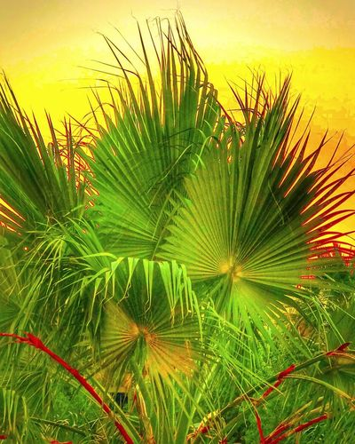 Sunset in Dubai with some greenery Iphonephotography IPhoneography Sunset Growth Nature Green Color Beauty In Nature Freshness No People Plant Outdoors Flower Day Palm Tree Frond Sky