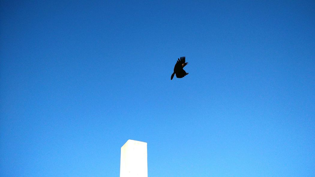 Sky Bird Photography In Motion Solitude PicturePerfect Slowmo Phonecamera TakeOff