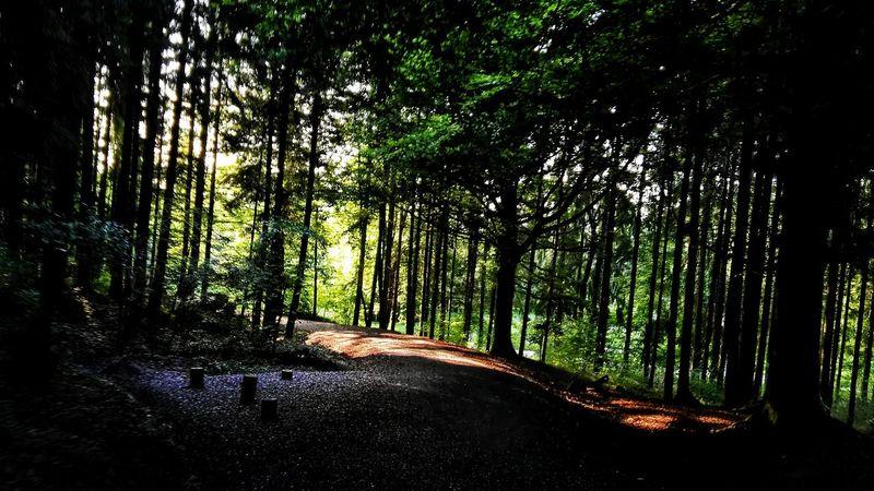 Waldstrecke Forrest Wood Wald Waldspaziergang Waldweg Forrest Path Path Weg Way Durchfahrt Im Vorbeifahren Beim Durchqueren Waldes