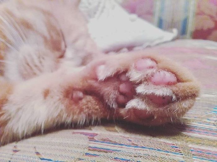 Instacat Cat Catlovers Catslover Catlover Gommini Love Cute Sweet Sleeping Sleepingcat Photooftheday Picoftheday Photo Happy Myhappiness Cutecat Cats Redcat EyeEm Eyeemgallery Tumblr Tumblrcat Tumblr Eyeemanimals eyeemcat