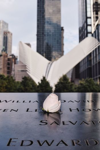 White rose at national september 11 memorial and museum