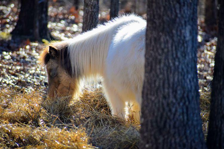 Portrait Pony