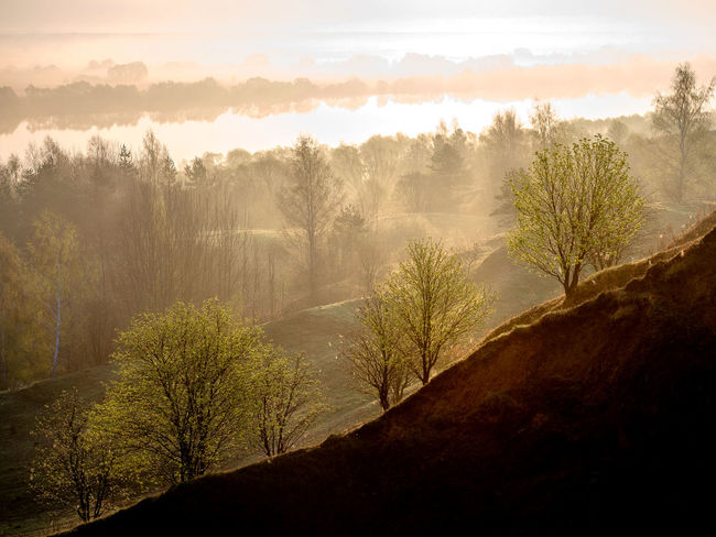Russia, Oka river, fog, early morning Russia Beauty In Nature Cloud - Sky Day Early Morning Environment Fog Hazy  Idyllic Land Landscape Mountain Nature No People Non-urban Scene Oka River Outdoors Plant Scenics - Nature Sky Tranquil Scene Tranquility Tree