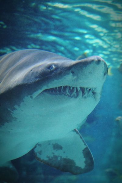 Shark Orginal Experiences 2016 Juni Niklas Dramatic Angles Maximum Closeness BYOPaper! The Week On EyeEm Perspectives On Nature