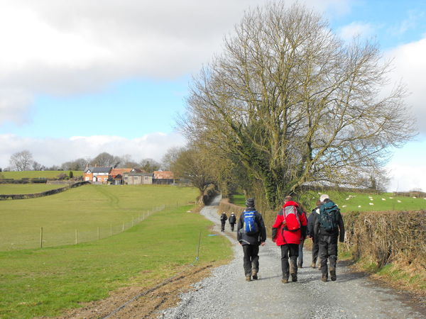 Walkers at the countryside Group Of People Rear View Sky Tree Plant Real People Nature Men Walking Day Bare Tree Adult Full Length Field Cloud - Sky Women Leisure Activity People Lifestyles Grass Outdoors Hikers Walkers Ramblers Country Road