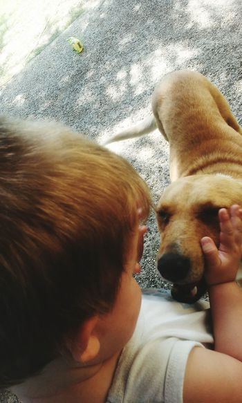 Boy Boy And Dog Baby Baby And Dog Playing Love Lovely Yellow Yellow Dog