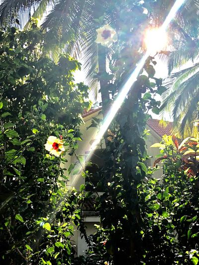 Growth Sunlight Sunbeam Plant Nature Day Flower Beauty In Nature