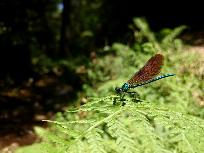 #NoFilter # #Dragonfly #Nature  #landscape #nature #photography Insect Animals In The Wild Animal Themes One Animal Animal Wildlife Nature Outdoors Green Color Day No People
