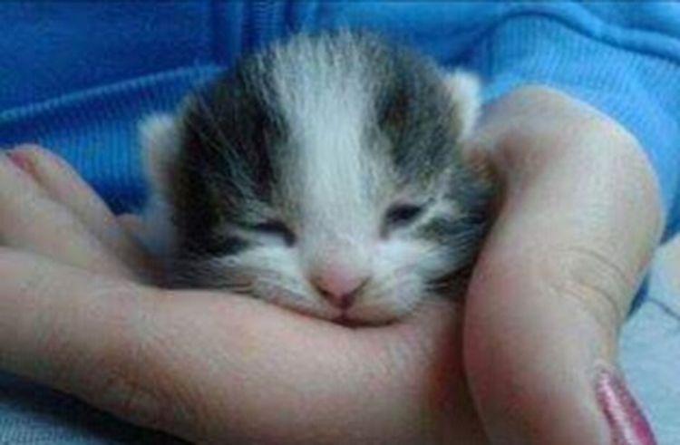 Pets One Animal Cats 🐱 Cuteeee♥♡♥ Cute Cat 😻