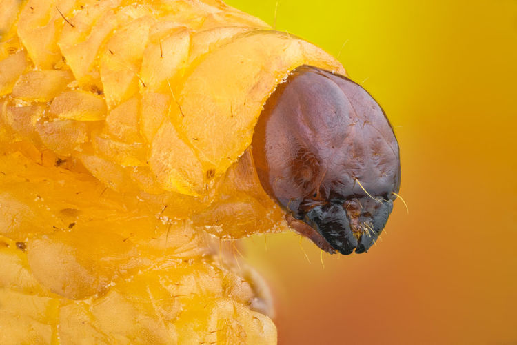 Close up of caterpillar outdoors