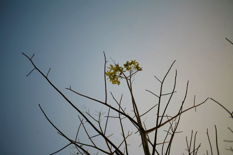 Low angle view of silhouette plants against clear sky