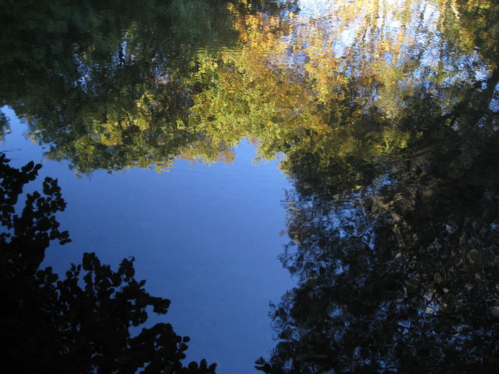 Autumn Beauty In Nature Branch Day Forest Growth Lake Leaf Low Angle View Nature No People Outdoors Reflection Scenics Sky Tranquil Scene Tranquility Tree Water