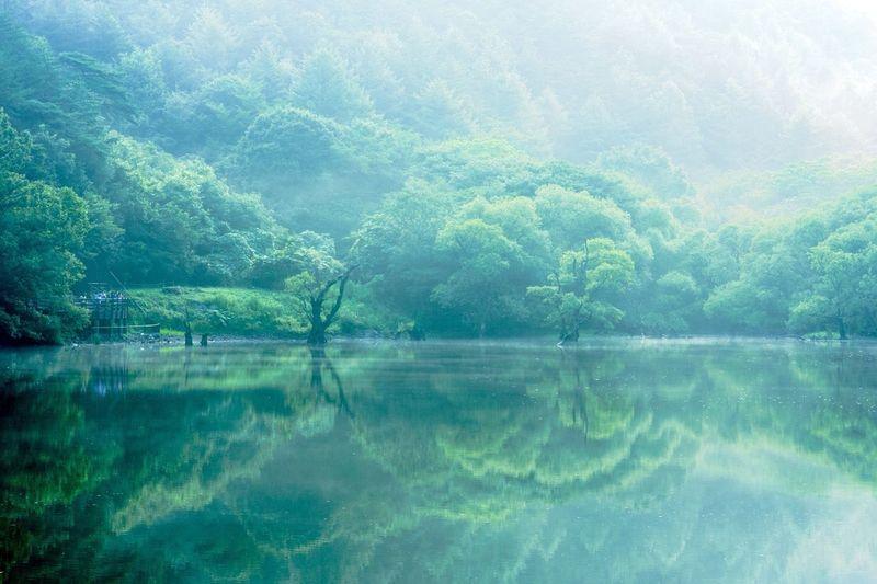 Rainforest reflecting in lake
