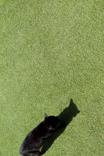 Showing Imperfection Day Cat Minimalism Minimal Minimalobsession Black Cat Grass Grassy Plastic Grass Shadow No People Animals Cats Perspectives Walking Around Walking Garden Shadows & Lights Shadows Passing By From My Point Of View From Above