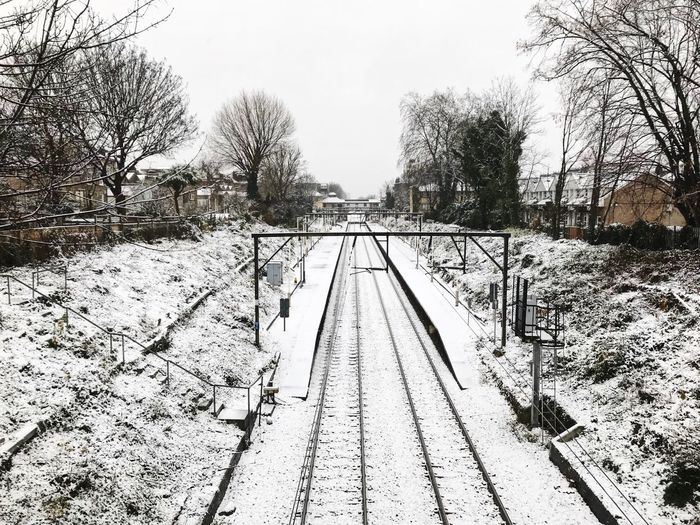 Bare trees by railroad tracks during winter