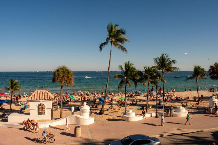 Palm trees on beach against sky on a busy day