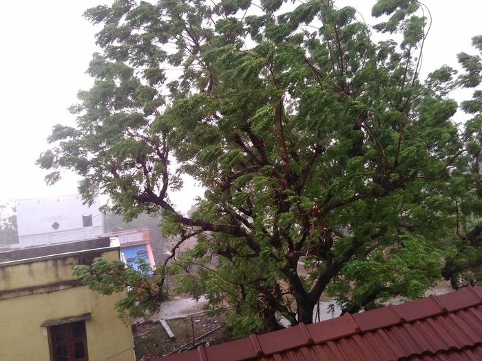 Floood Tree Building Exterior Day Nature Beauty In Nature Outdoors Sky Rain Rainy Days First Eyeem Photo