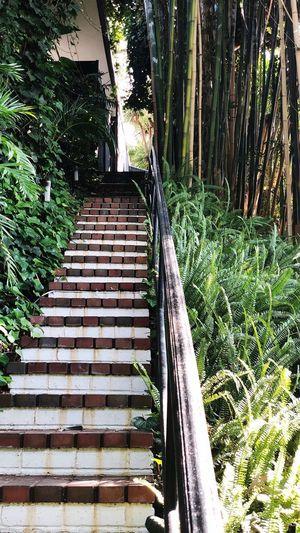 LA Jungle Plant