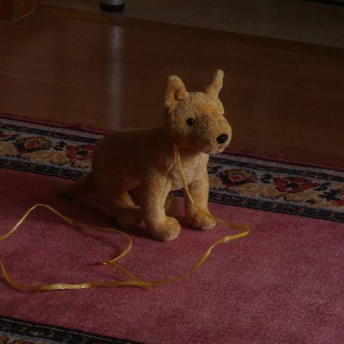 Toy Indoors  No People Stuffed Toy Childhood Evening Light Stuffed Animal Stuffed Dog The Week On EyeEm