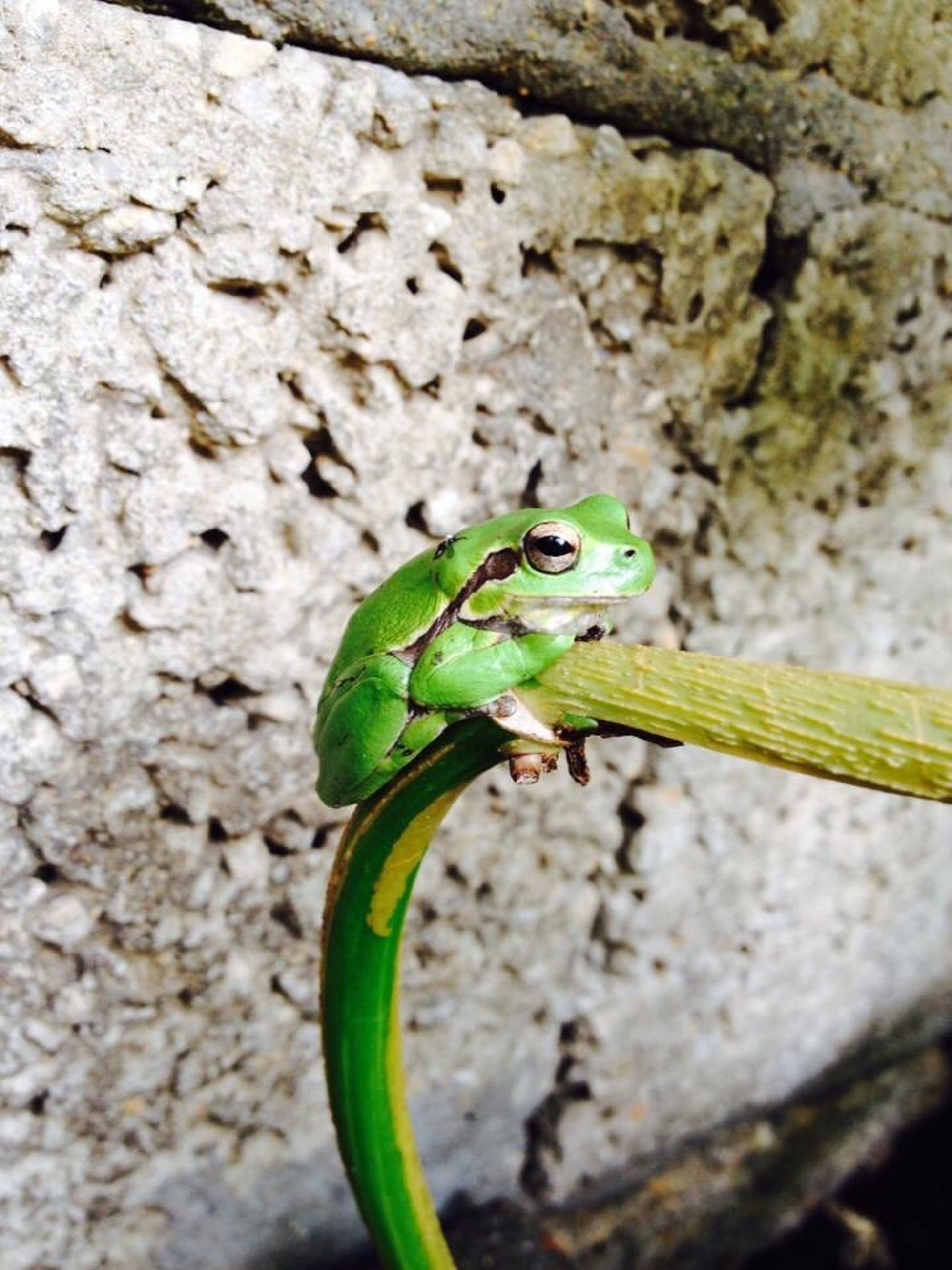 one animal, animals in the wild, animal themes, animal wildlife, close-up, outdoors, no people, nature, day, green color, insect, reptile, portrait, chameleon