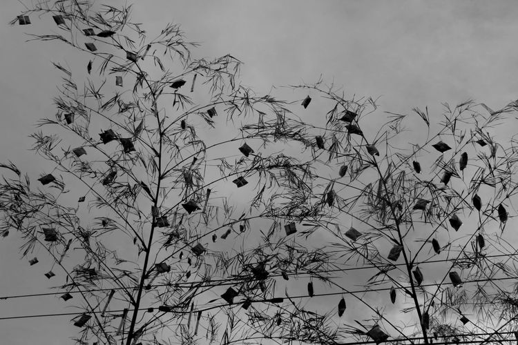 Agawan Agawan Festival Black & White Photography Black And White Clear Sky Day Growth Low Angle View Nature Outdoors Plant