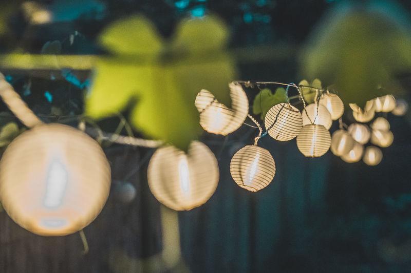 Close-up of illuminated lights hanging on plant