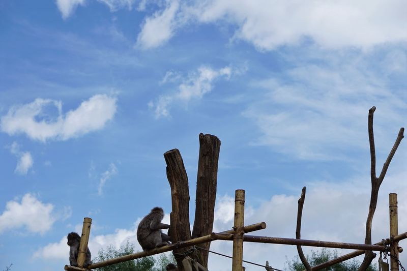 Sky And Clouds Japanese  Monkey Sky Cloud - Sky Nature No People Day Low Angle View Blue Outdoors