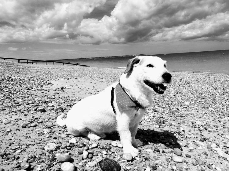 Dog Beach Sea Cloud - Sky One Animal Water Sky No People Sandwich Kent England Pets Domestic Animals Nature Sitting The Great Outdoors - 2017 EyeEm Awards