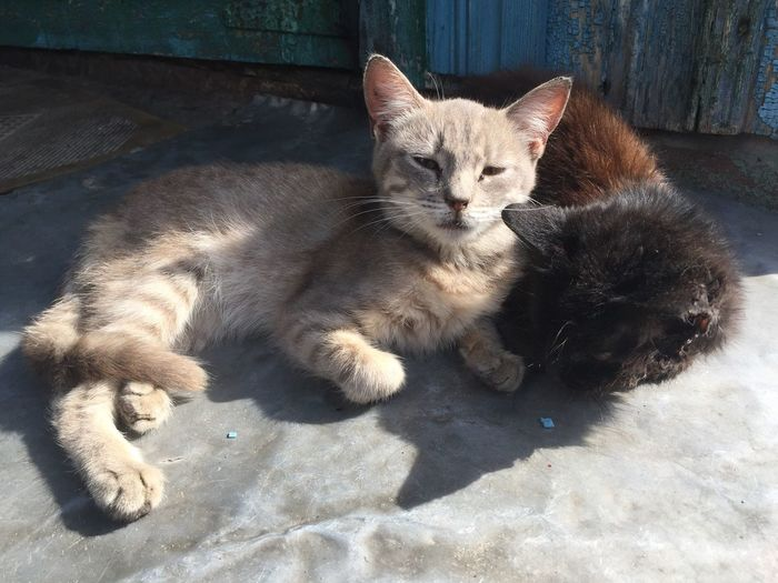 High angle view of stray cats lying on footpath