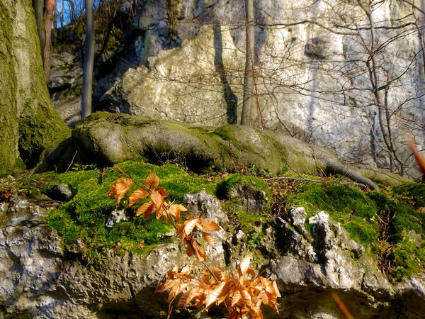 EyeEm EyeEm Best Shots - Nature EyeEm Nature Lover EyeEm Selects EyeEm Gallery EyeEmNewHere Poland Polska Beauty In Nature Eye4photography  Forest Jura Krakowsko Czestochowska Leaf Moss Nature Outdoors Plant Rock - Object Root Scenics Tree