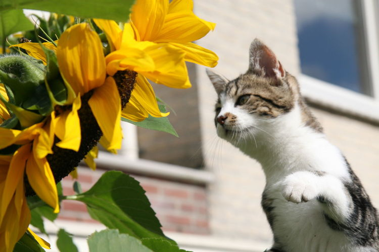 WILD LIFE Animal Themes Cat Flower No People One Animal Pets Plant Yellow Sommergefühle Pet Portraits