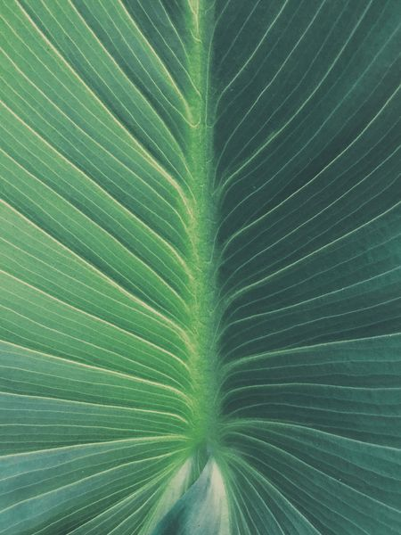 Leaf Green Color Backgrounds Close-up Full Frame Nature Pattern No People Freshness Growth Day Outdoors Plant Frond Fragility Beauty In Nature
