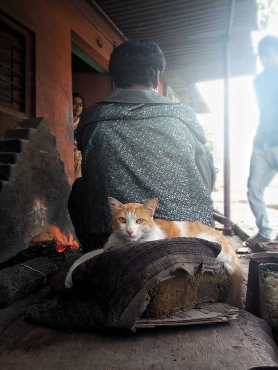 EyeEmNewHere One Person Cat Intense Eyes Intence Cat Eyes Cat Guarding Owners Ironsmith Street Photography Indian Street Indianphotographer India