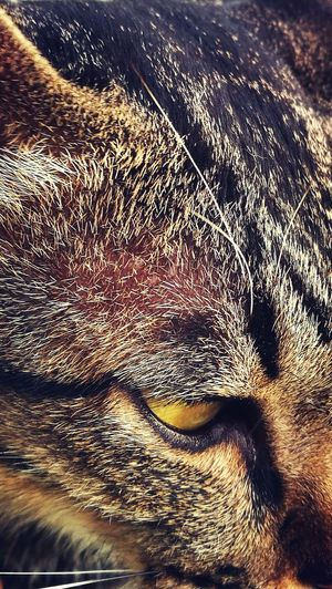 Cat Eye Cat Pet