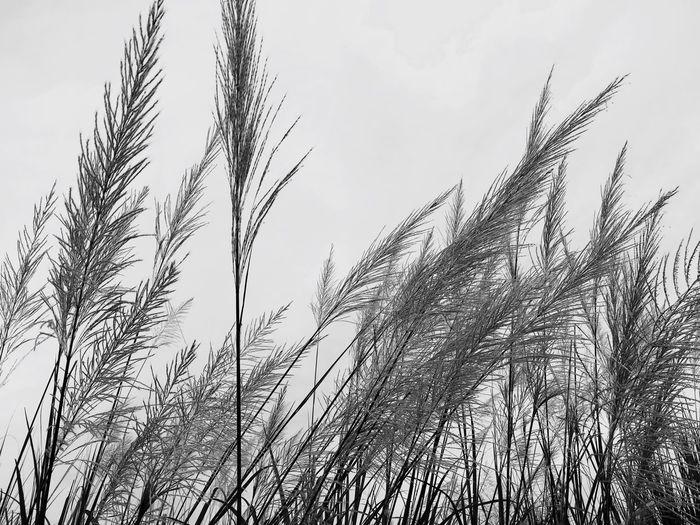 🌾🌾🌾 Nature Photography Blackandwhite